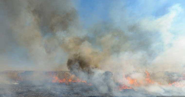 лесные пожары хмао челябинск