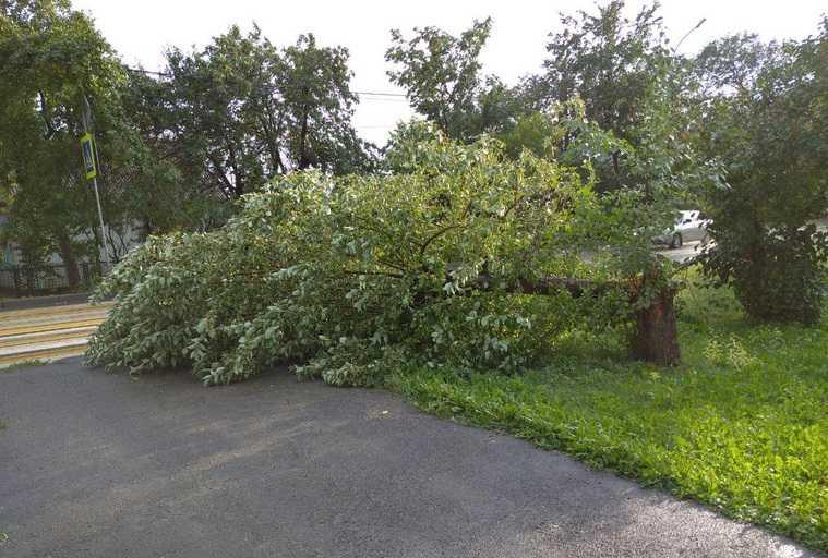 На Челябинскую область обрушился ураган. Деревья вырывало с корнем, улицы затопило. ФОТО, ВИДЕО