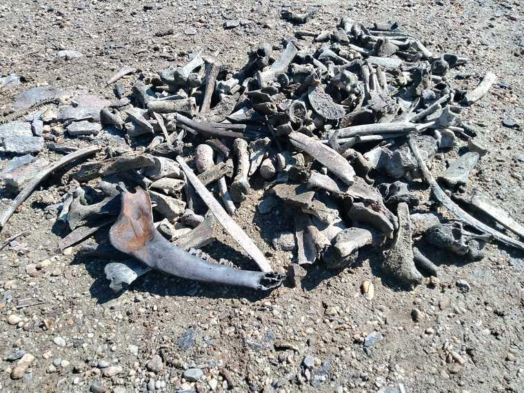 Ученые из Екатеринбурга обнаружили кладбище мамонтов. ФОТО