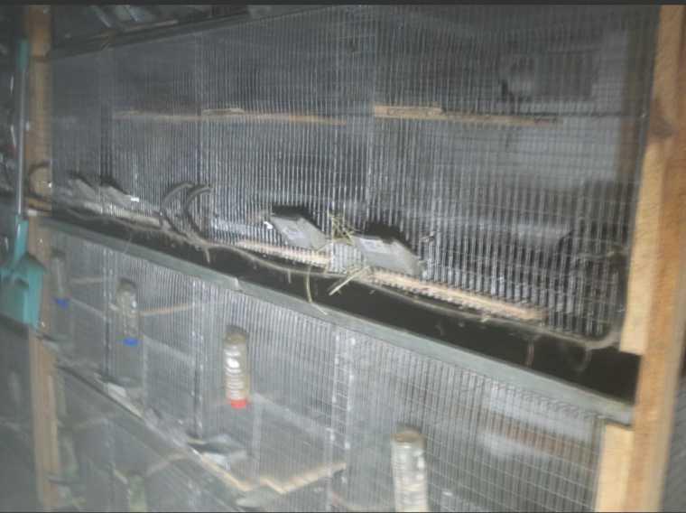 В подпольном террариуме Екатеринбурга сгорели сотни животных. Фото