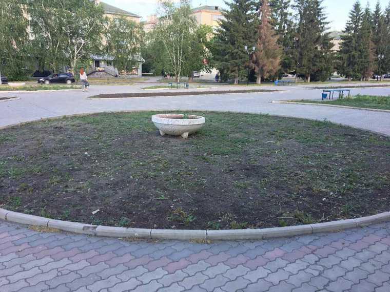 Напротив мэрии Шадринска выросла конопля. Фото