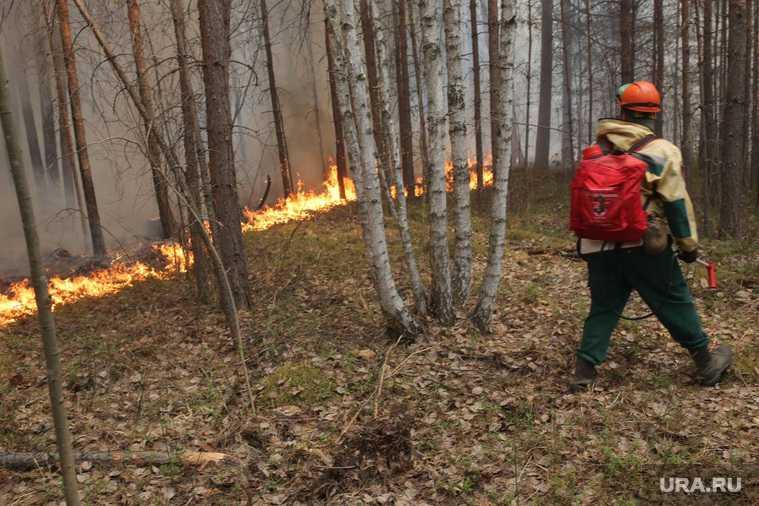 лесные пожары Свердловская область Алексей Кузнецов министр экологии