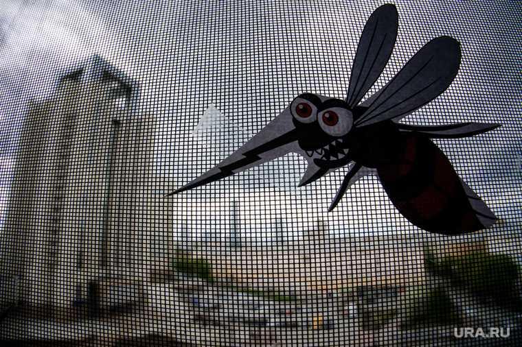 опасные комары российские курорты